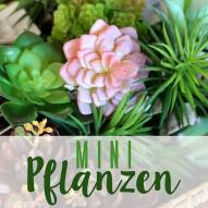 Miniatur Pflanzen - Miniatur Sukkulenten