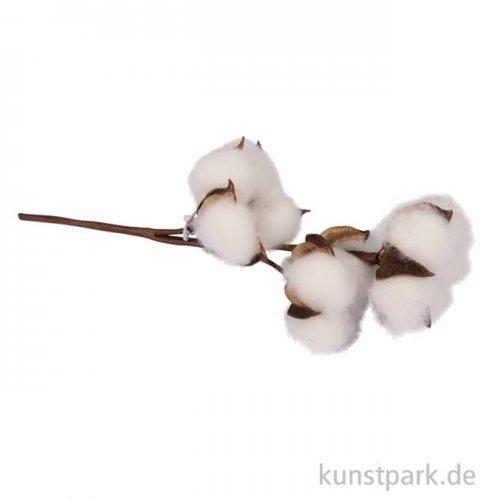 Baumwollblütenzweig, 23 cm