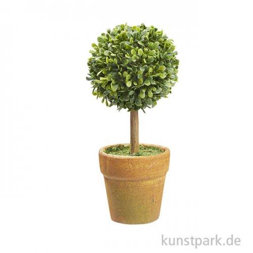 Buchs-Baum mit Topf , 15 cm