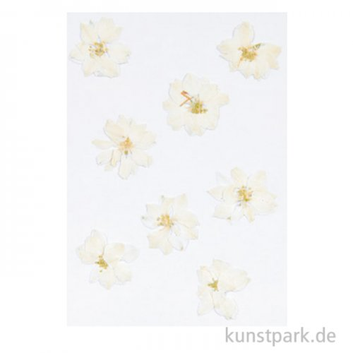 Gepresste Blüten - Rittersporn Weiß, 8 Stück