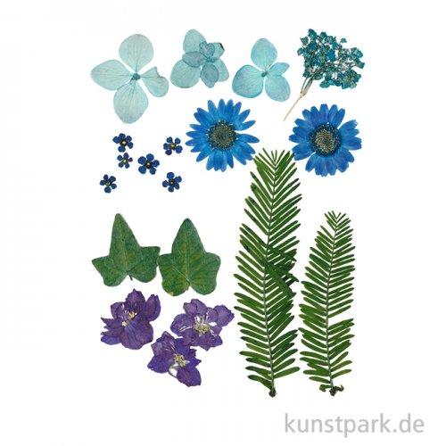 Gepresste Blüten und Blätter - Blau