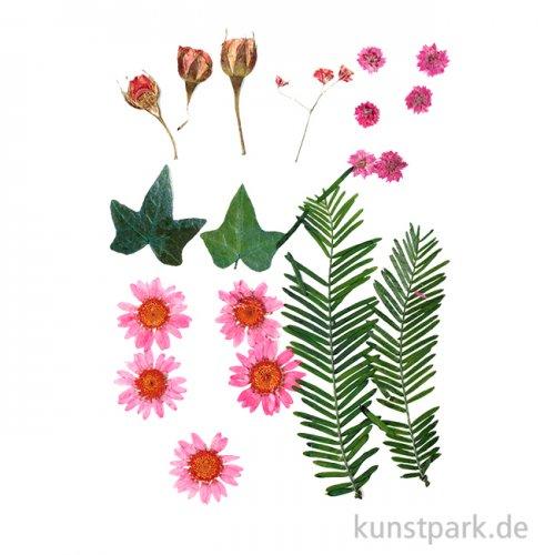 Gepresste Blüten und Blätter - Rosa