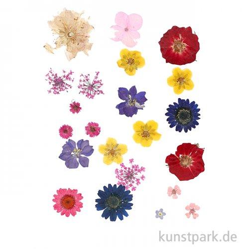 Gepresste Blüten - verschiedene Farben