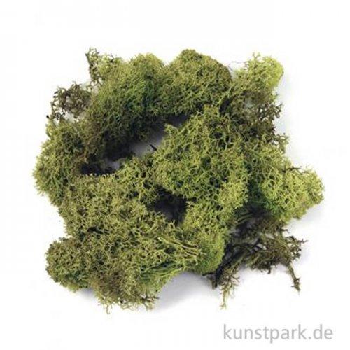 Islandmoos - Hellgrün, 30 g