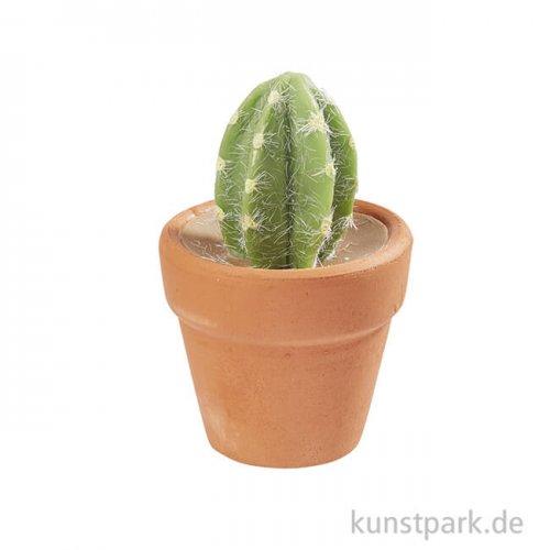 Mini Kaktus im Terracottatopf, oval, 5 cm