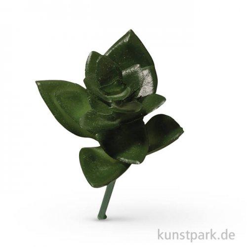 Mini-Sukkulente - Haworthia, 5x3,5 cm, 1 Stück