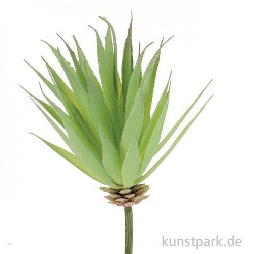 Mini-Yucca 16 cm