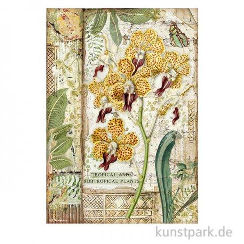 Stamperia Reispapier - Amazonia Orchid, DIN A4
