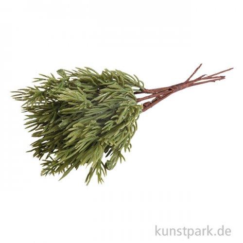 Thuja-Zweige,18 cm, 6 Stück