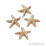 Mini Seestern - 2 cm, 4 Stück Natur