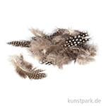 Perlhuhnfedern - natur, 100 Stück