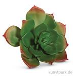 Sukkulente - Echeveria Grün, 8,5x3,5 cm, 1 Stück